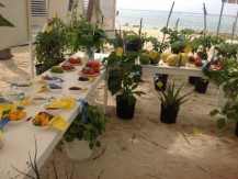 Little Cayman's Agriculture Show