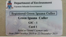 DOE releases more info on Green Iguana Cull