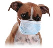 Parvo Virus Outbreak in Grand Cayman