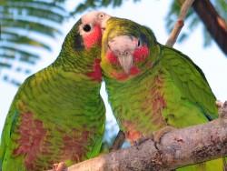Hurricane season increases threat to national bird