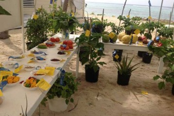 Display at the Little Cayman Agriculture Show May 3, 2014.